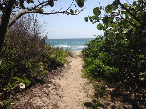 View of ocean on sandy path through trees