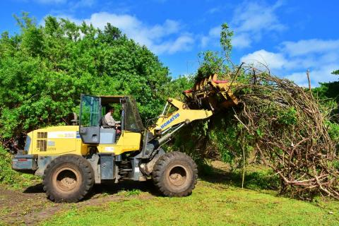 A tractor removes invasive plants from Ocean Strand Park